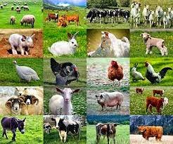 CRIA DE ANIMALES 15 IDEAS DE NEGOCIO