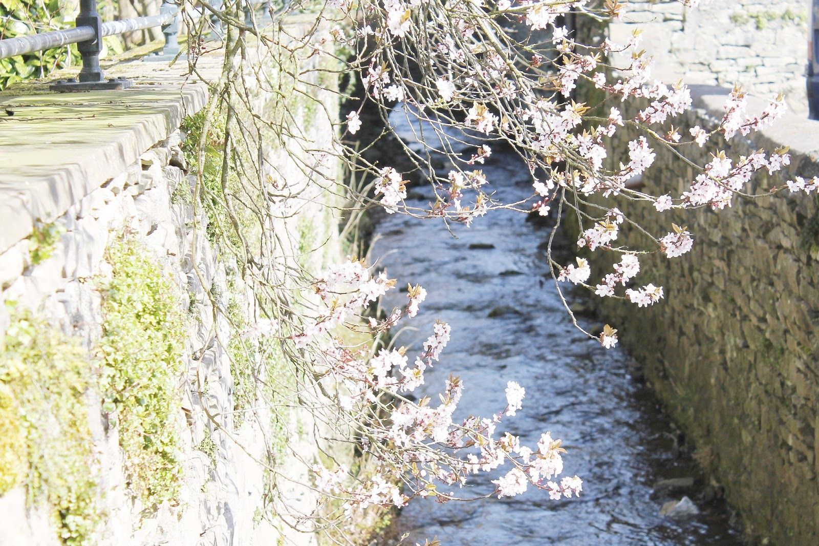 Spring Lake District town blog tour, where I live