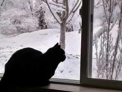 Black cat sits in windowsill, looking through window at snow-covered landscape outside