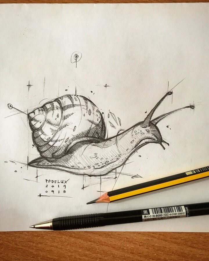 09-Snail-Psdelux-Animal-Drawings-www-designstack-co
