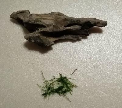 今回利用するウィローモスと木化石の組み合わせ