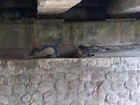 Penemuan Mayat di Kolong Jembatan Kajangan Blora