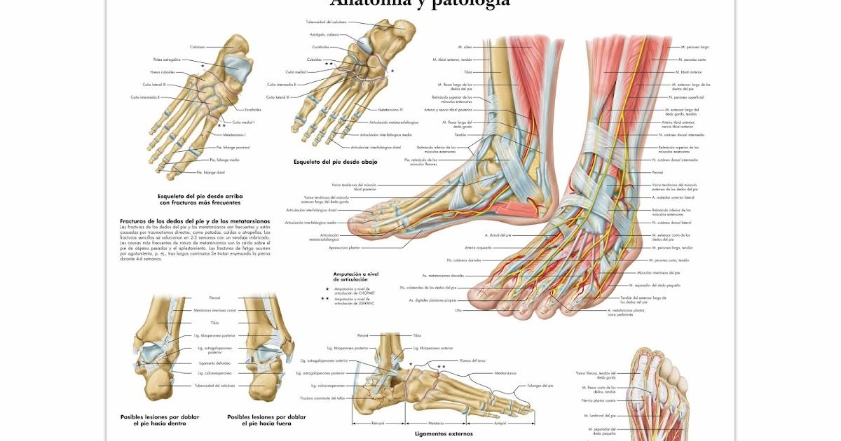 Pon tus pies en las mejores manos: Introducción al pie