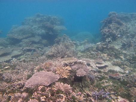 yakni kawasan kepulauan yang terletak di Laut Jawa Pulau Karimunjawa, Wisata Keindahan Bawah Laut
