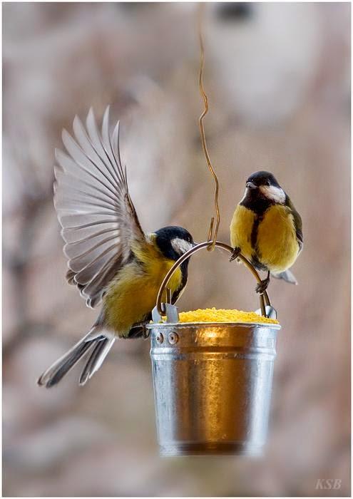 Pajaritos: foto de coleccion   imagenes de aves