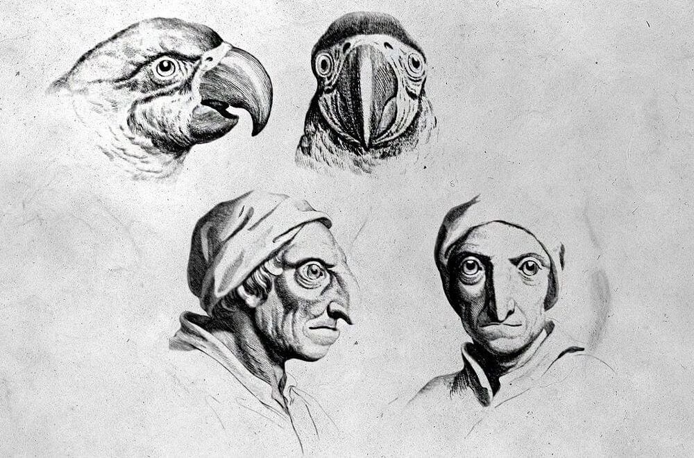14-Parrot-Animal-Transformations-Drawings-from-the-1600s-www-designstack-co