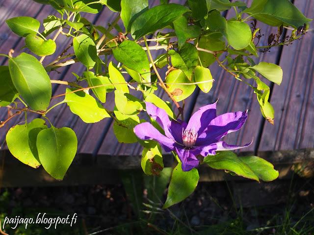 kukkailottelu kärhö