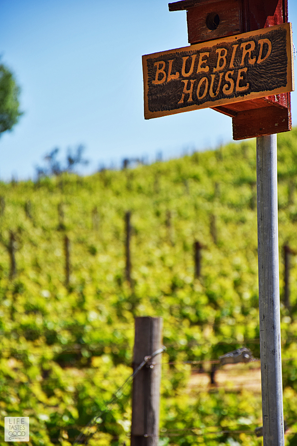 8 reasons why you should take a San Francisco Wine Tasting Tour to California's Wine Country | by Life Tastes Good #LTGtravels
