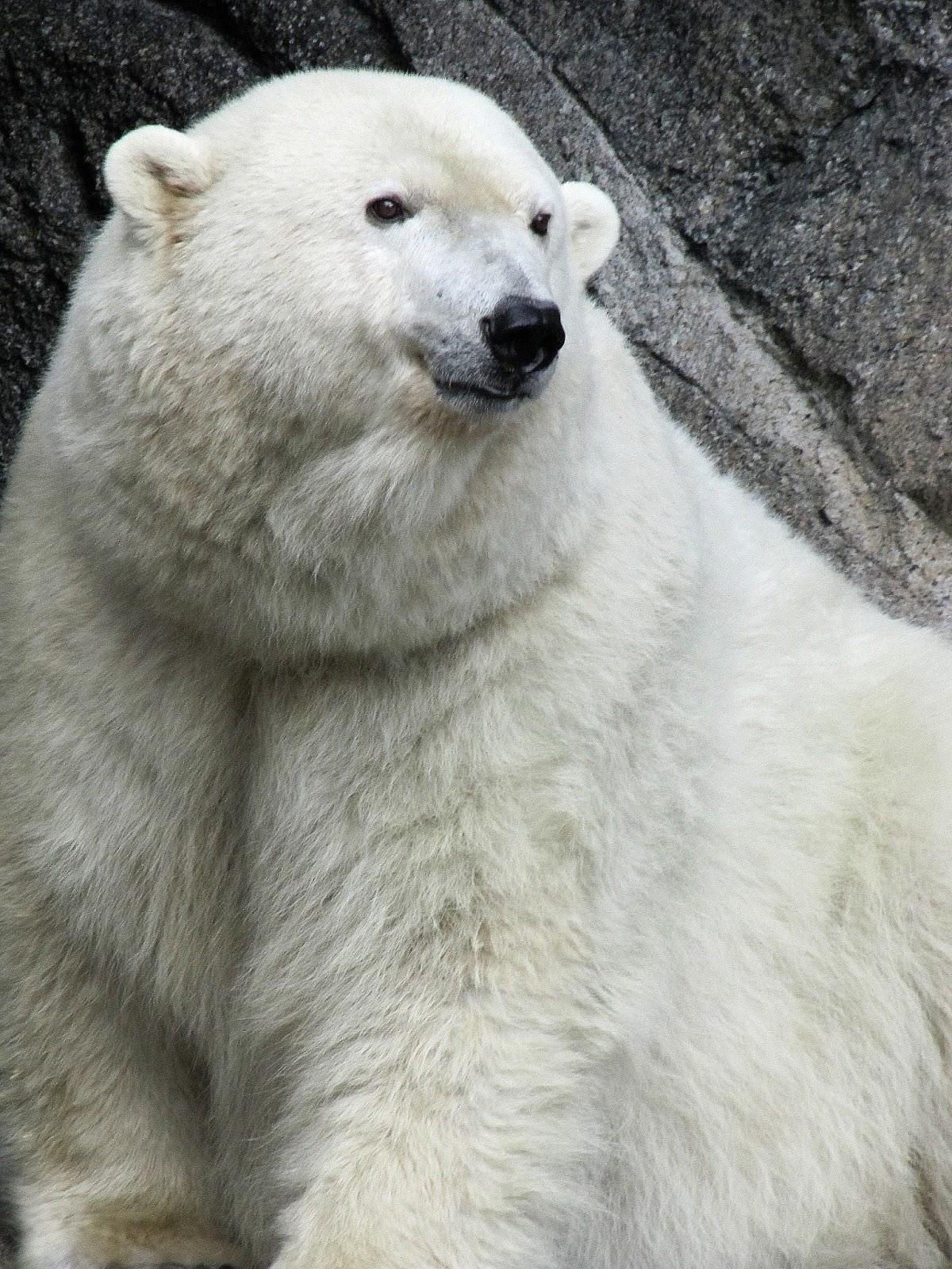 My Polar Bear Friends and Friends of Polar Bears: Only 45