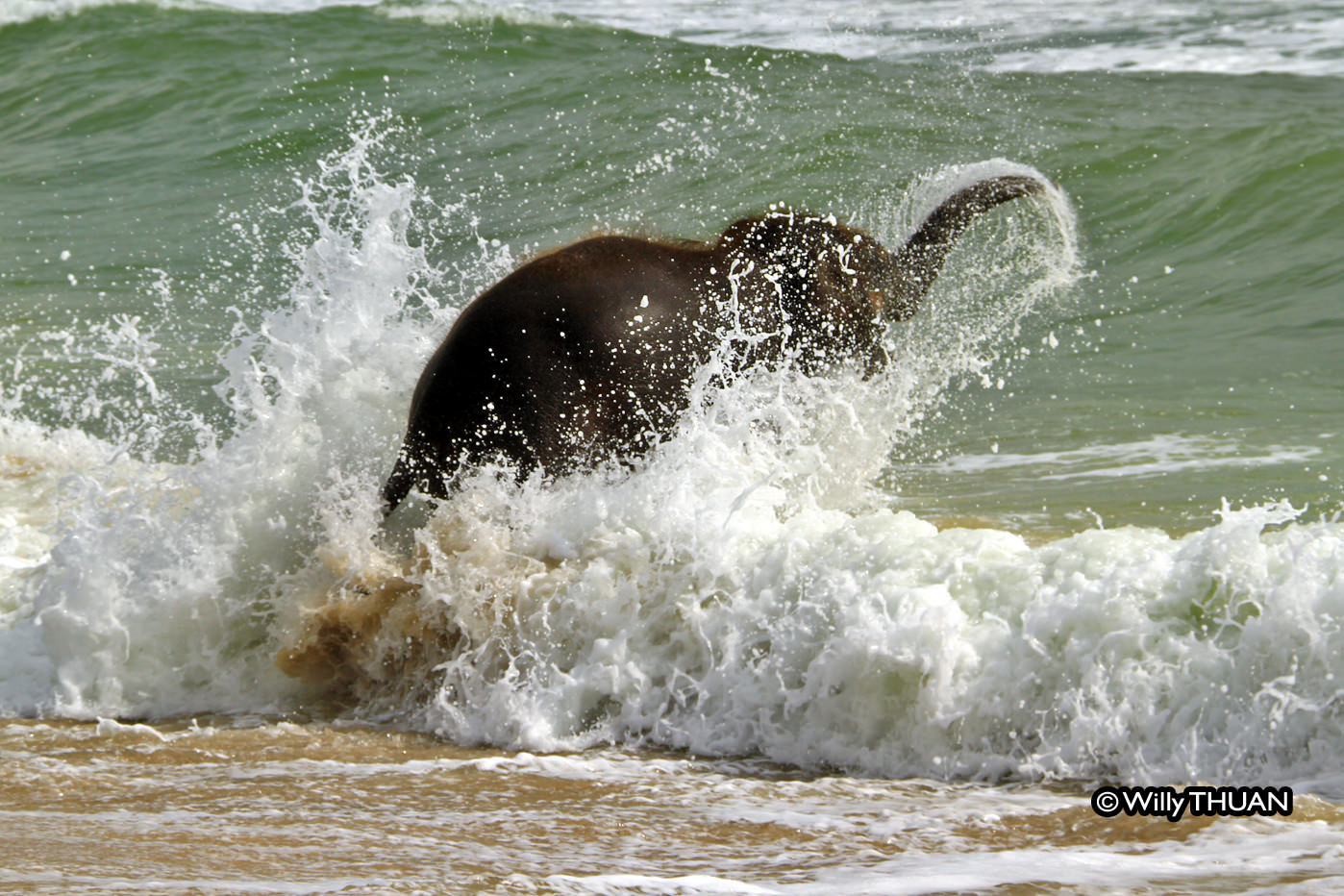 Baby Elephant Playing on the Beach: The real story behind ...
