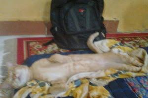 aksi,kucing,tidur