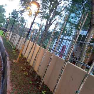 Tukang Taman Di Jakarta Timur Murah