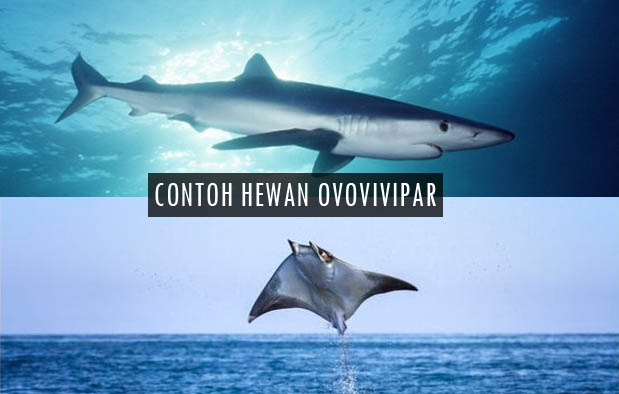 950+ Gambar Hewan Laut Dan Penjelasannya HD Terbaik