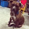 Thor: Animal Friends' Home to Home Adoption Program