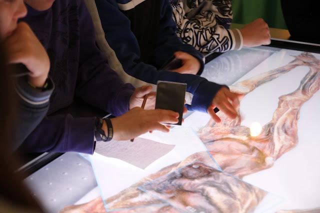 Cardiovascular examination of Ötzi