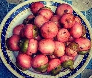 buah kalangkala merah