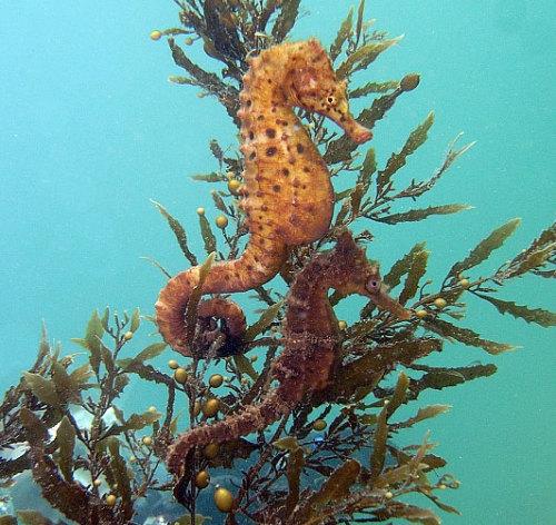 World's Most Amazing Things: Amazing Seahorse - Seahorses ...