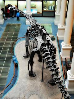 Esqueleto de Dinossauro no Museo de La Plata, Argentina