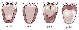 Bagian-bagian Lidan dan Hidung beserta Fungsinya sebagai Indra Pengecap dan Pembau