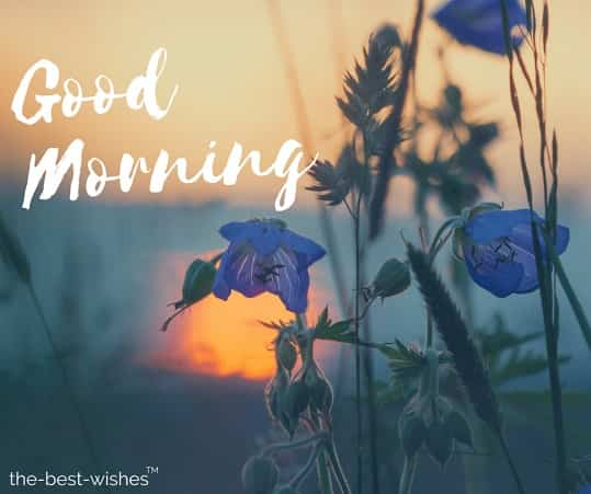 good morning wishes flower