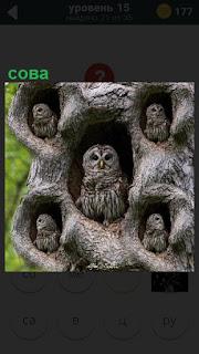 Дерево, в котором много дупло и в каждом сидит сова серого цвета как само дерево