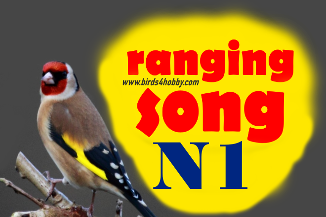 the ranging songs of goldfinch Before Mating number 01