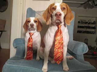 Perros con corbata
