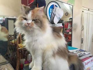 Kafe Kucing di Bali - Indonesia Wajib Dikunjungi Cat Lover