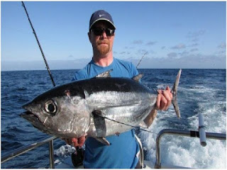 Nama Nama Ikan Laut Dangkal ALBACORE TUNA ( THUNNUS ALALUNGA )