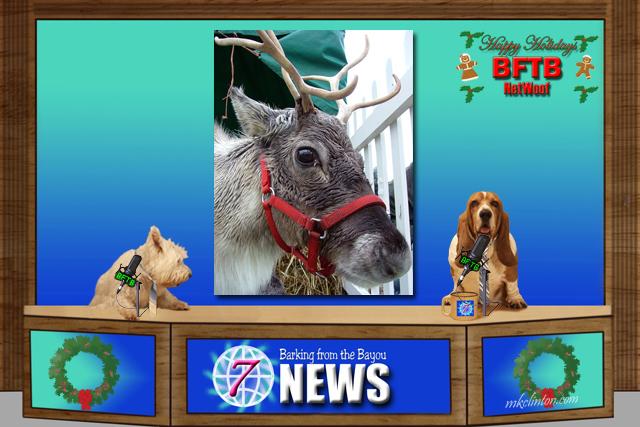 BFTB NETWoof News reports on Santa's reindeer
