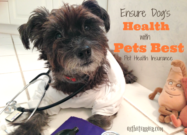 Dr Oz the Terrier ensure dog's health with Pets Best Health Insurance