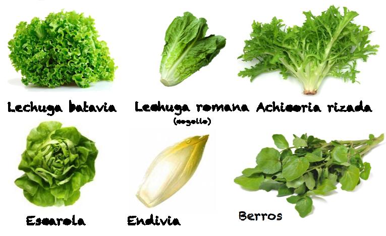 Sembraditos colegio bernadette lechuga y sus variedades - Diferentes ensaladas de lechuga ...