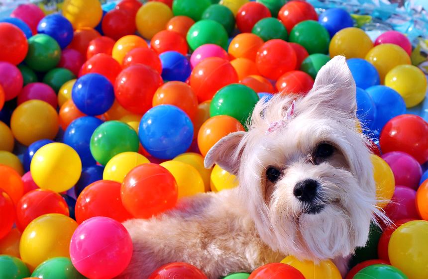 dog ball pit