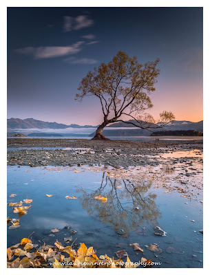 Autumn, Lake Wanaka, That Wanaka Tree, Wanaka