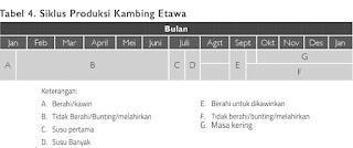 Siklus Produksi Kambing Etawa