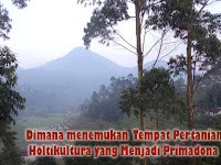 Dimana menemukan Tempat Pertanian Holtikultura Yang Menjadi Primadona