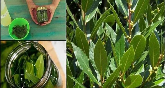 Αυτο ειναι το φυτο που θα σας απαλλαξει απο φλεβιτιδα, απωλεια μνημης & πονοκεφαλους!