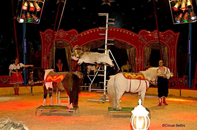 Norberts Internationale Circuswelt Zirkus Bellini Gratis Zirkus
