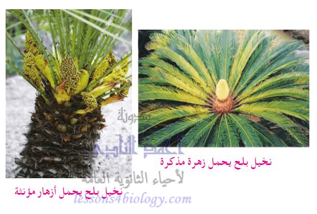 التلقيح الخلطى فى النباتات الزهرية
