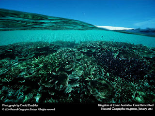 great barrier reef, national geographic, david doubilet