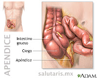Anatomia del apendice