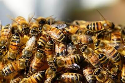 تفسير حلم رؤية النحل في المنام