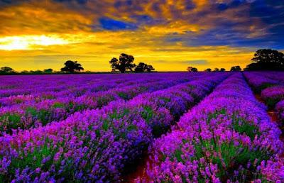 Προστατέψτε τις μέλισσες φυτεύοντας αυτά τα φυτά!