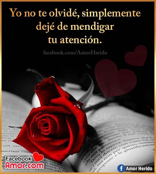 pensamientos de amor con rosas