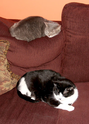 couch = cat bunk beds
