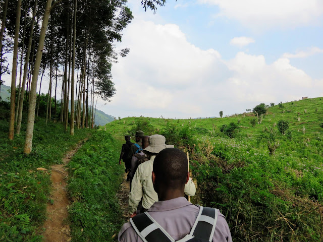 Mountain gorilla tracking in Western Uganda: Our expedition to see the Nkuringo Family