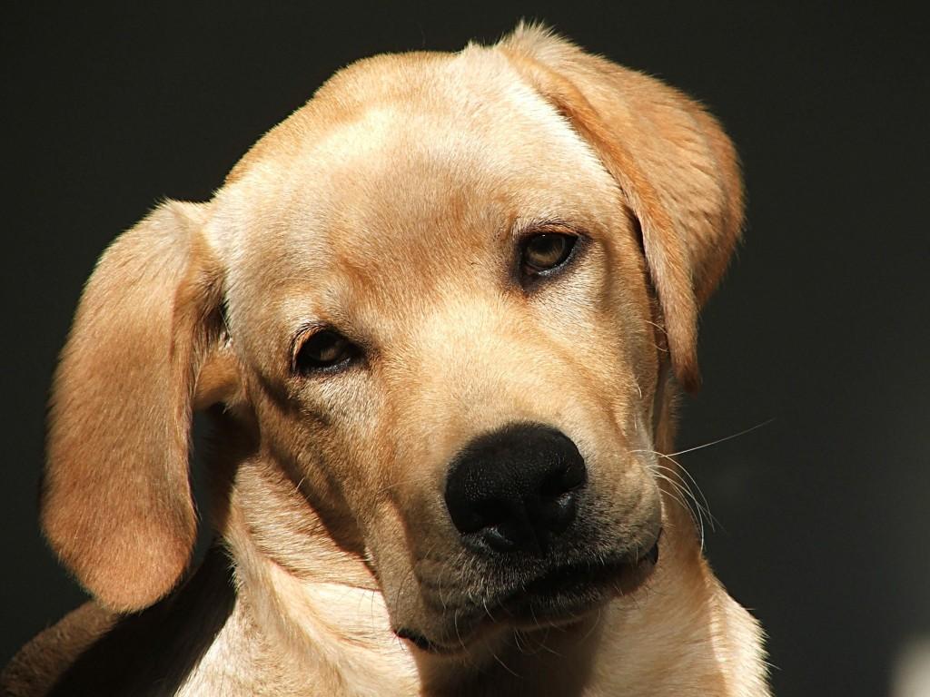 Comportamiento Animal : Serie Razas Caninas