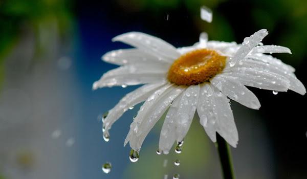 En Güzel Çiçek Duvar Kağıtları İndir