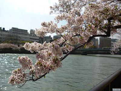 染井吉野と源八橋