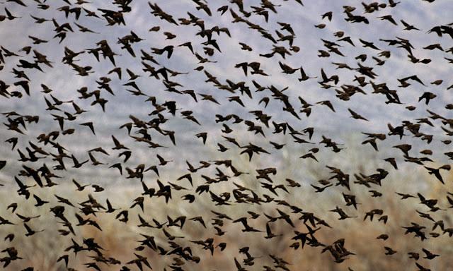 Ученые объяснили массовое падение птиц с неба в Карелии